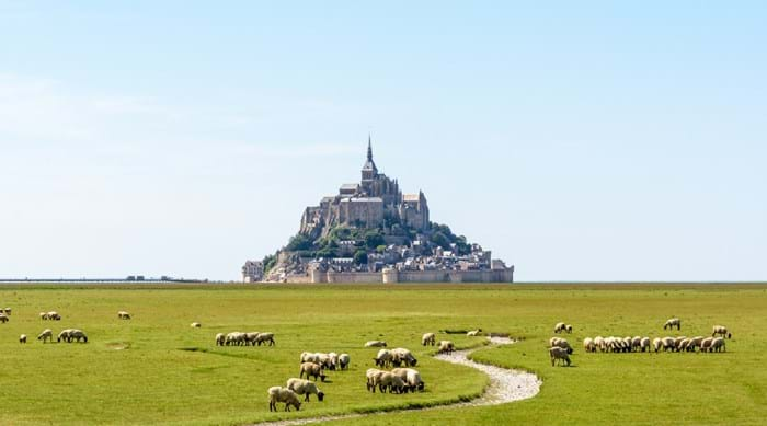 The sheep grazing the fields at Mont Saint-Michel.
