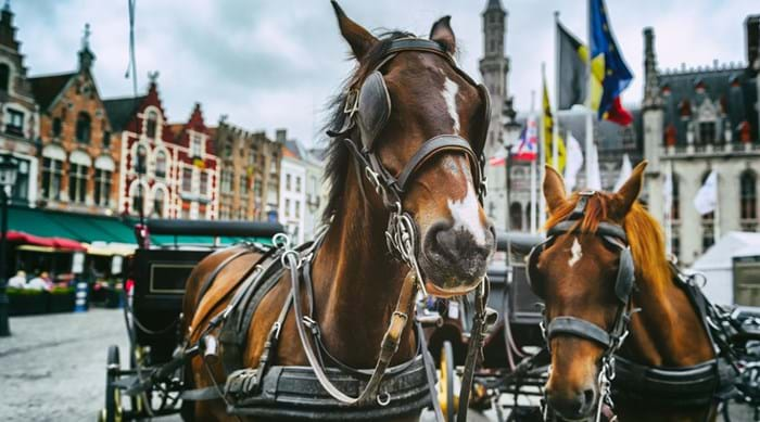 A horse & carriage is the perfect way to enjoy the sites of the city.