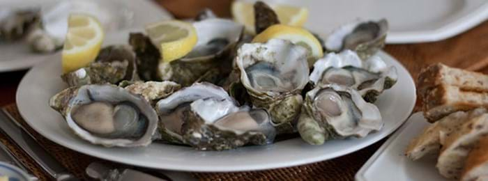 oysters in Normandy