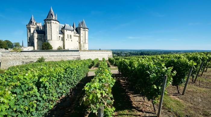 Vineyard at the medieval castle, Château de Saumur, Saumur