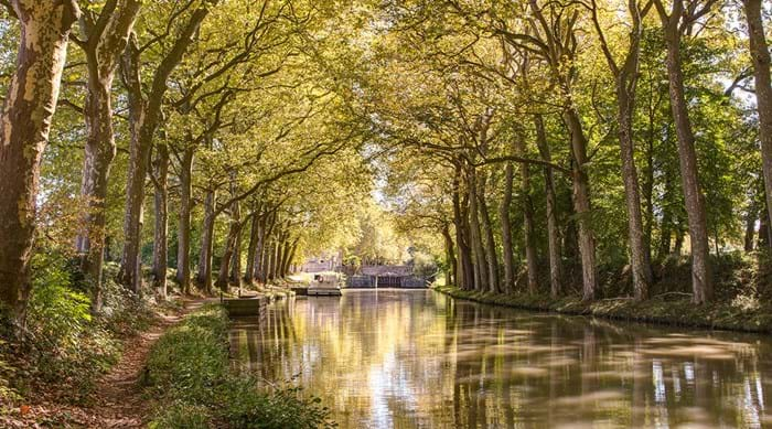 Take a dog walk along the beautiful Canal du Midi in Carcassonne