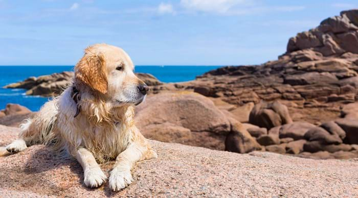 A trip to the beach is a treat for any dog who enjoys the sunshine after a quick dip!