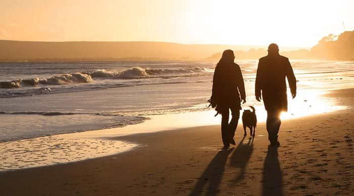 Whilst peak summer months ban dogs from the busy parts of the beach, late summer and autumn is the perfect time for a dog walk.