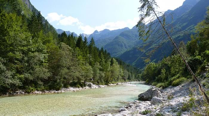 There are plenty of off-lead walks near our campsite in Slovenia.