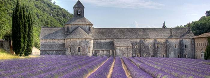 The beautiful lavender fields