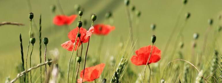 Remembrance Sunday France