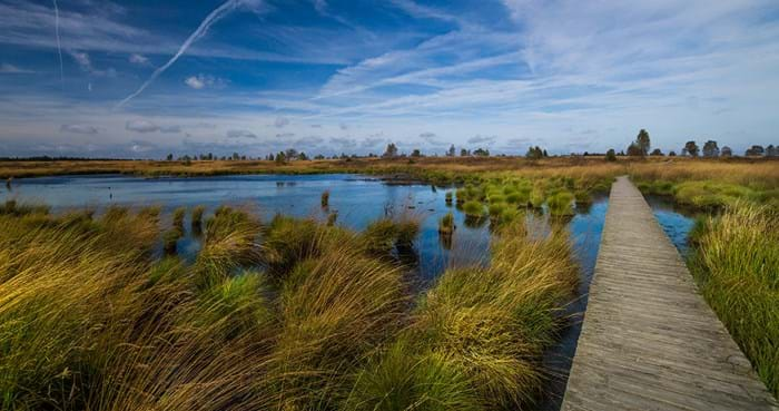 Wooden boardwalks lead you through the beautiful marshes of the High Fens