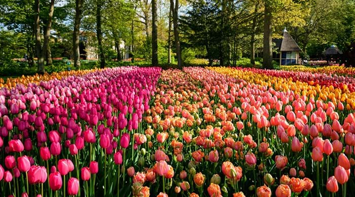 The dazzling colours of Keukenhof.