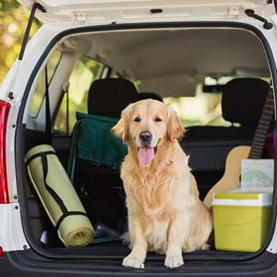 Exciting travel products for your pet!